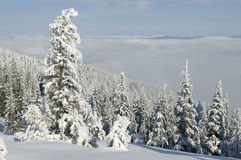 Beautiful winter day Royalty Free Stock Photography