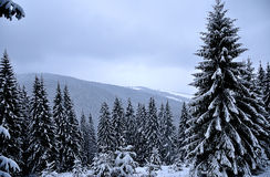 Beautiful winter day in mountains Stock Photography