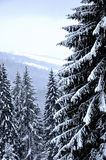Beautiful winter day in mountains Royalty Free Stock Images