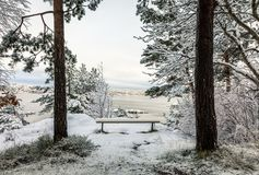 Beautiful winter day at Odderoya in Kristiansand, Norway. Bench covered in snow, standing between two pine trees. The. Ocean is seen in the background Royalty Free Stock Photo