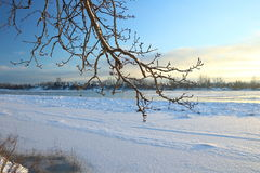 Beautiful winter day. Snow on the bank of the river. Trees under the snow. The low winter sun royalty free stock photo