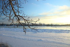 Beautiful winter day. Snow on the bank of the river. Trees under the snow. The low winter sun royalty free stock photography