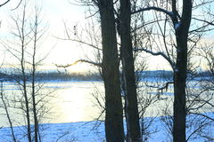 Beautiful winter day. Snow on the bank of the river. Trees under the snow. The low winter sun stock images