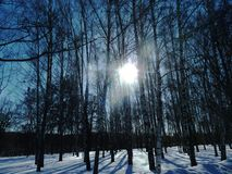 Beautiful frosty winter day . Winter sun. stock photography
