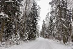 beautiful winter day view with empty road and snow-covered forest stock photos