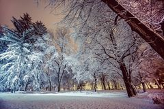 Beautiful winter evening landscape in city park Stock Photography