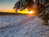 Beautiful winter fields and pine tree branch landscape Stock Images