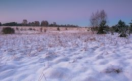 Beautiful winter fields and trees landscape Stock Photo