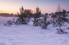 Beautiful winter fields and trees landscape Stock Photos
