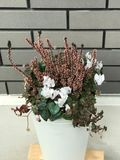 Beautiful winter flower in white vase bucket. Beautiful winter flower in white vase Stock Image