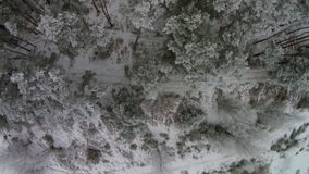 Beautiful  winter  forest. Aerial shot Stock Images