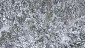 Beautiful winter forest. Aerial view from the drone. stock footage