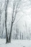 Beautiful winter in the forest royalty free stock photo