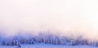 Beautiful winter forest border. Sun light over trees background, fog over firs covered with snow, wintertime greeting card with copy space, beauty of Royalty Free Stock Photography