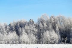 Beautiful winter forest. Covered with snow with frost Royalty Free Stock Photos