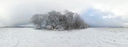 Beautiful winter forest 360 degrees panorama Royalty Free Stock Photos