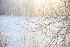 Beautiful winter forest Stock Photos