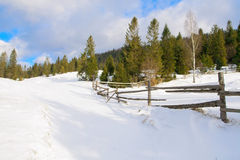 Beautiful winter forest landscape Royalty Free Stock Photos