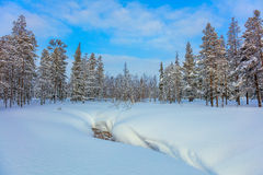 Beautiful Winter forest landscape with big snow Stock Image