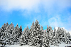 Beautiful winter forest landscape Stock Photo