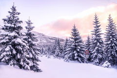 Beautiful winter forest landscape Stock Image