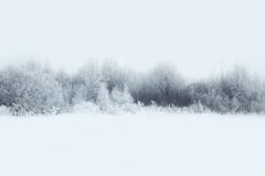 Beautiful winter forest landscape, trees covered snow