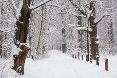 Beautiful winter forest landscape, trees covered snow Royalty Free Stock Photos