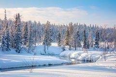Beautiful Winter forest landscape  - trees covered snow and smal Royalty Free Stock Image