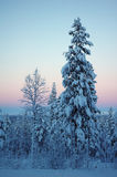 Beautiful winter forest Royalty Free Stock Images