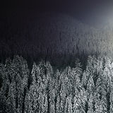 Beautiful winter forest at night Stock Photo