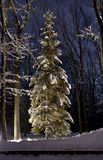 Beautiful Winter forest at night Stock Photos