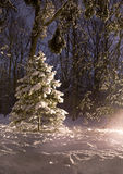 Beautiful Winter forest at night Royalty Free Stock Photography