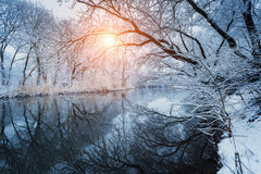 Beautiful winter in forest on the river at sunset Royalty Free Stock Photography