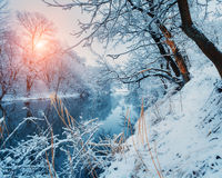 Beautiful winter in forest on the river at sunset Stock Photography