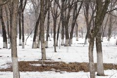 Beautiful winter forest and the road Royalty Free Stock Images