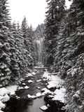 Beautiful winter forest scenery Royalty Free Stock Images