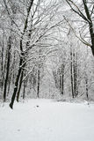 Beautiful winter, forest scenery Stock Photos
