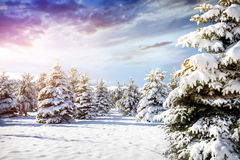 Beautiful Winter Forest Scenery Stock Photos
