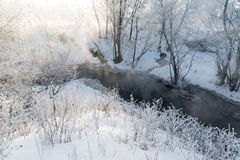 Beautiful winter forest on sunny day Royalty Free Stock Photos