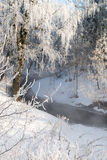 Beautiful winter forest on sunny day Royalty Free Stock Photography