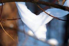 Beautiful winter forest Stock Photo