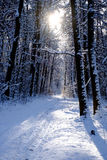 Beautiful winter forest Stock Images