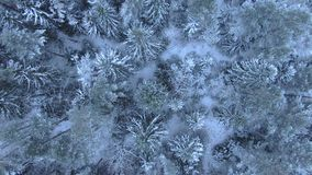 Beautiful winter forest. Aerial view from the drone. stock video footage