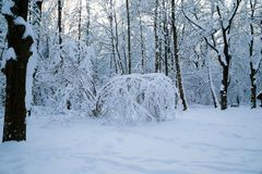 Beautiful winter forrest Stock Images