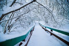 Beautiful winter forrest Royalty Free Stock Images