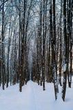 Beautiful winter forrest Stock Photos