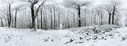 Beautiful winter forrest 360 degrees panorama. 360 degrees panorama: Beautiful winter forrest stock photo