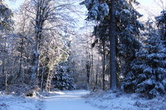 In the beautiful winter forrest Royalty Free Stock Photo
