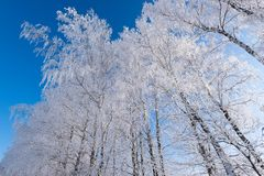 Beautiful winter frosty day in the country stock photo