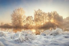 Beautiful winter. Frosty landscape of wild nature with sunbeams. Vivid Christmas landscape. Winter scenery. With sun rays through trees. Snowy plants in morning royalty free stock photography